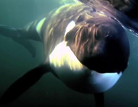 The Whale / Saving Luna